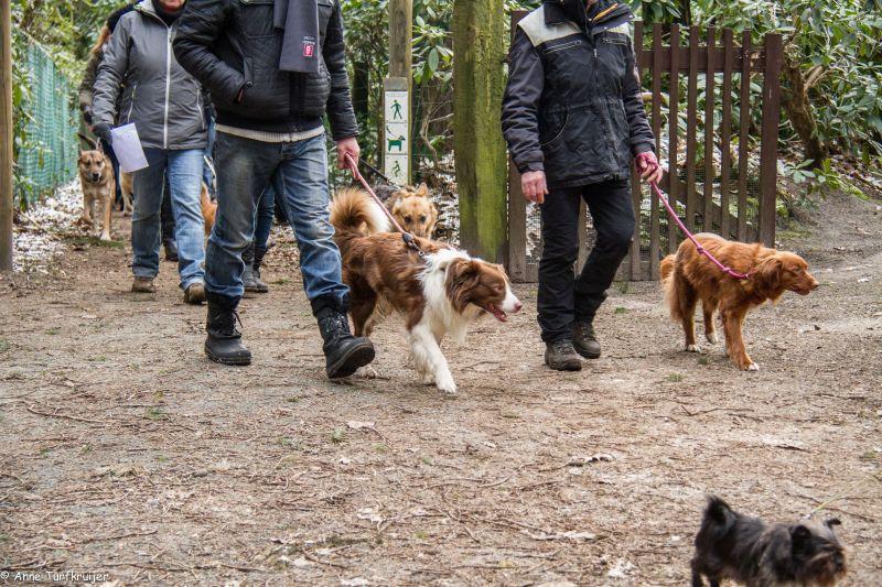 HZ hondenwandeling-7369