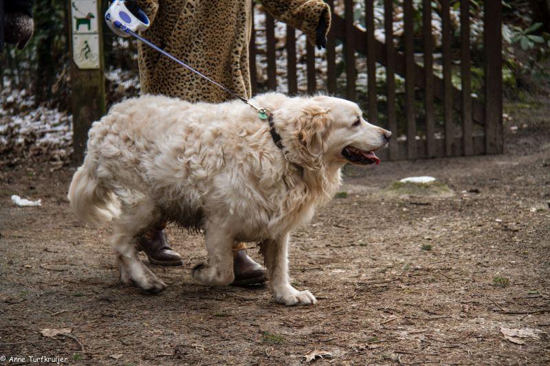 HZ hondenwandeling-7381
