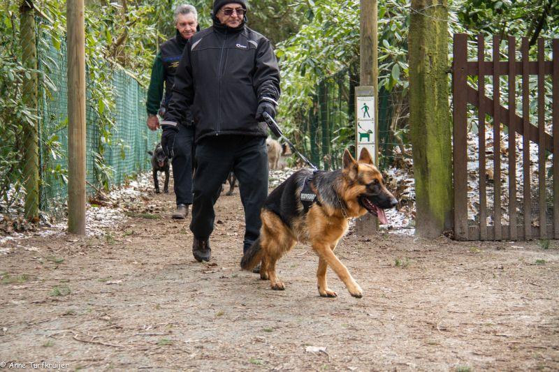 HZ hondenwandeling-7386