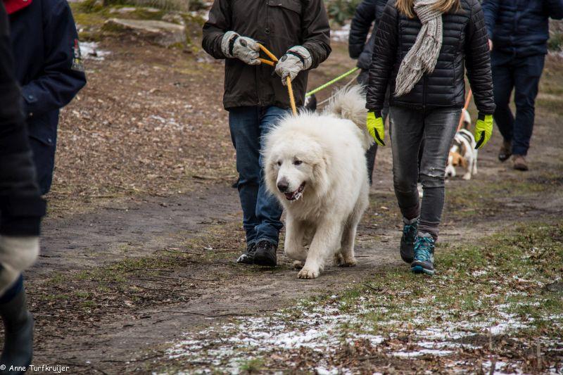 HZ hondenwandeling-7428
