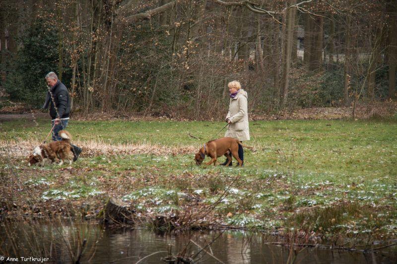 HZ hondenwandeling-7431