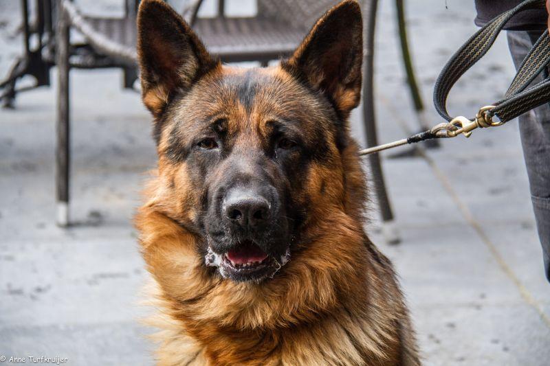 HZ hondenwandeling-7433