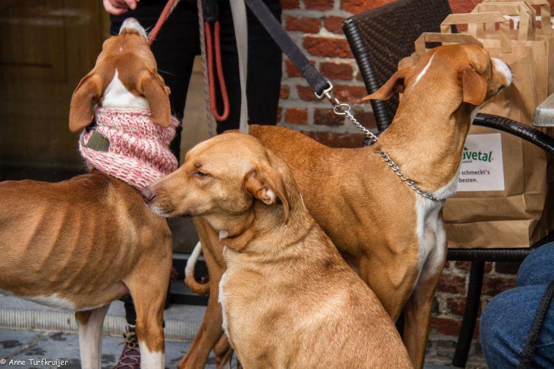 HZ hondenwandeling-7443