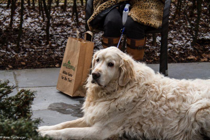 HZ hondenwandeling-7444