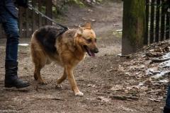 HZ hondenwandeling-7370