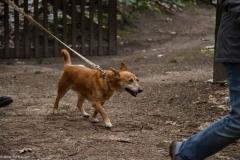 HZ hondenwandeling-7371