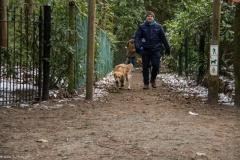 HZ hondenwandeling-7375