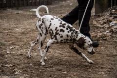 HZ hondenwandeling-7380