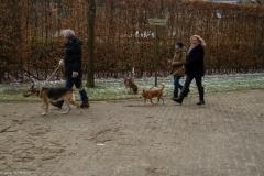 HZ hondenwandeling-7405