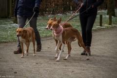HZ hondenwandeling-7408